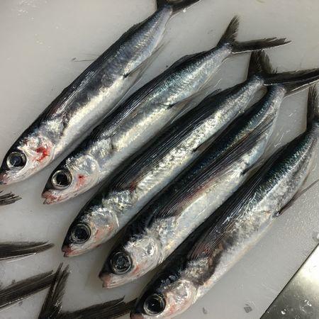 5.3飛び魚